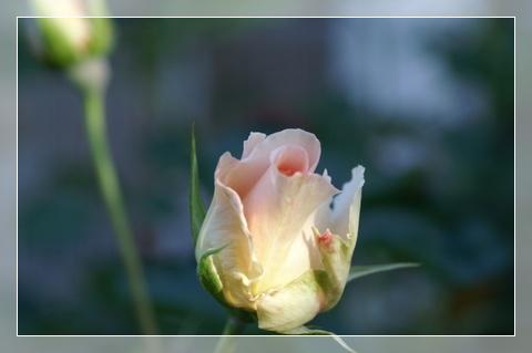 PICT0008_20120522215133.jpg