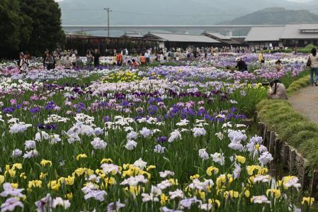 加茂花菖蒲園 菖蒲園の風景