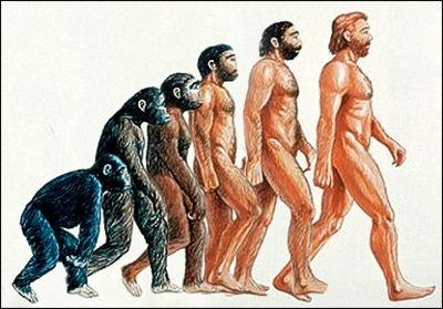 教科書的進化図