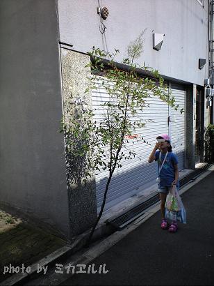 10.07道端の花・なんてんCA391129