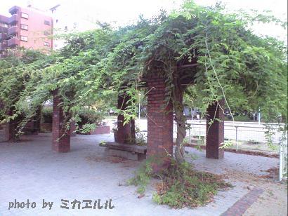 10.09初秋の公園CA391224
