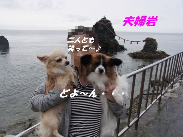 コピー ~ R0010529