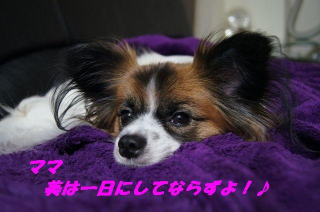 DSC005731.jpg