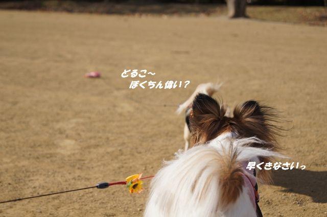 DSC04031.jpg
