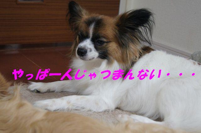 DSC07263.jpg
