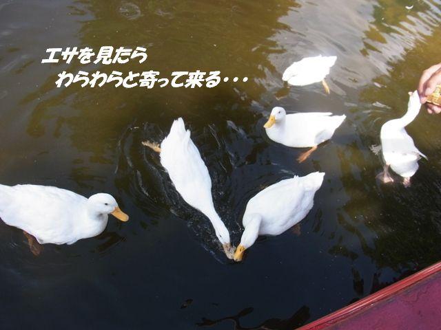 R0012895.jpg