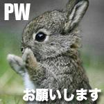 PWうさぎ