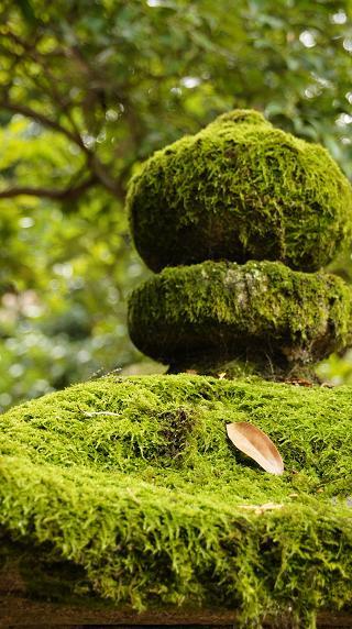 緑したたる苔