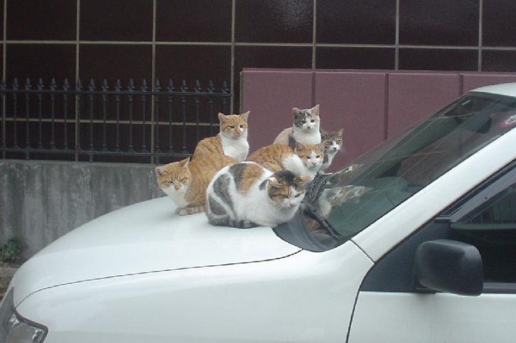 猫の窃盗団?
