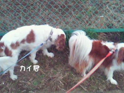 NEC_2959.jpg