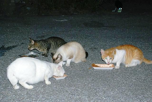 猫の食事タイム