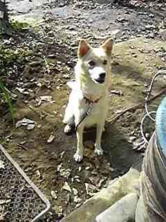1018母犬
