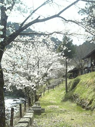 どり~む桜