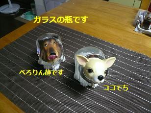 sinnjiru 6