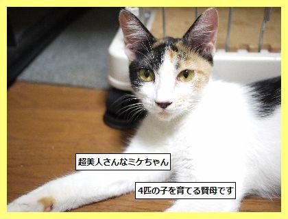 みけ2 (1)