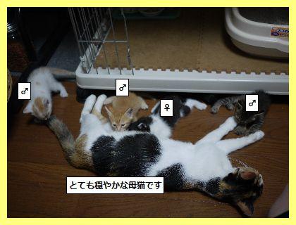 みけ2 (2)
