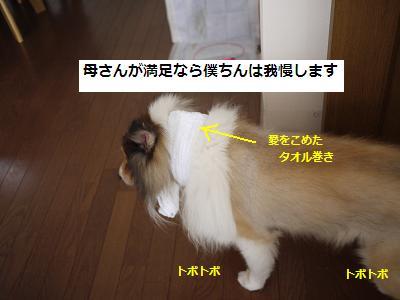 doumo4.jpg