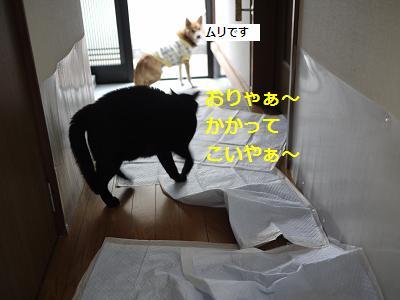 furi-3.jpg