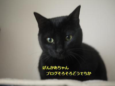 fuyu4.jpg