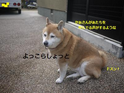 hakoniwa2.jpg