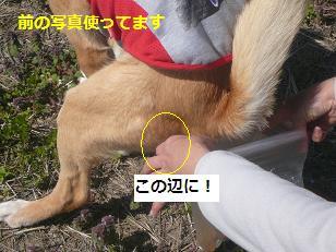 koneji1.jpg