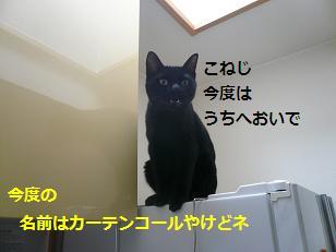 koneji2.jpg