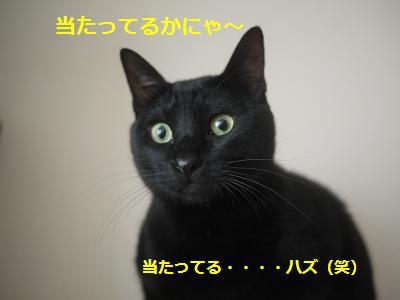 nebasyo5.jpg