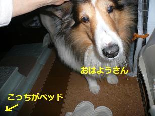 sinnjiru.jpg