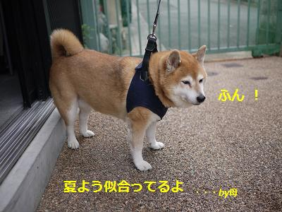 tokusyuu5.jpg