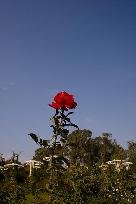 20131117_長居植物園01
