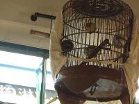スタバの鳥籠