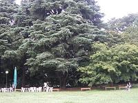 庭園旧岩崎邸