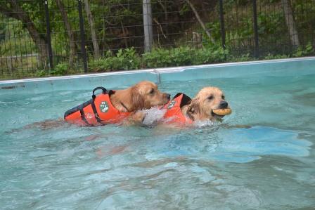 wanko swimming