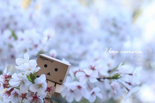 IMG_2014_04_06_9999_40ダンボーと桜5