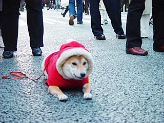 クリスマス犬2