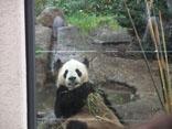 上野パンダさん