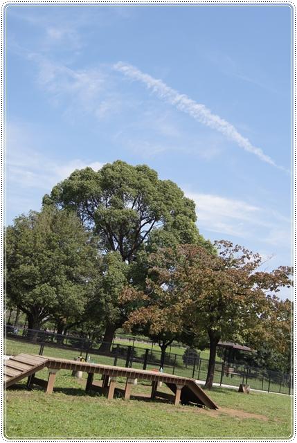 26-9昭和記念公園2ドッグラン