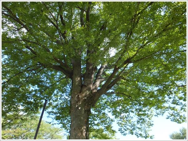 26-9木の下でランチ