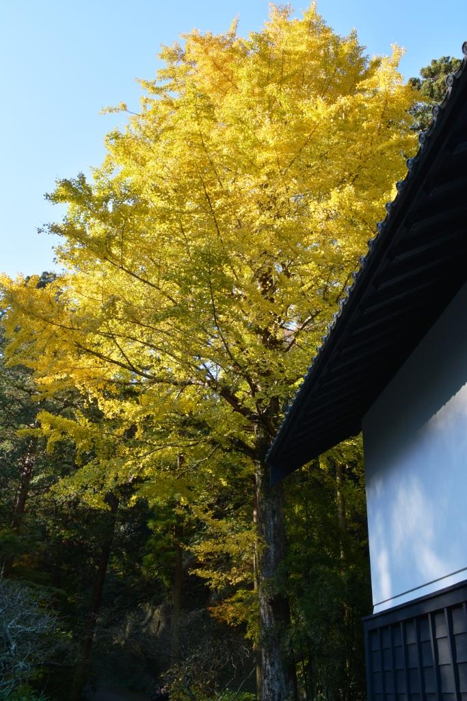 鎌倉25-02