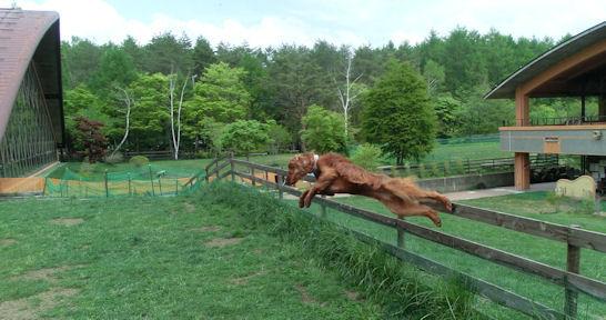 CIMG7935-jump.jpg