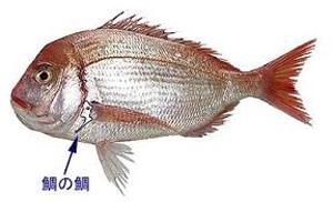 鯛の鯛blog02