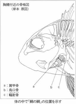 鯛の鯛blog01
