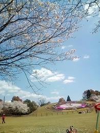 11'花見@綾町「馬事公苑」(綾競馬場)