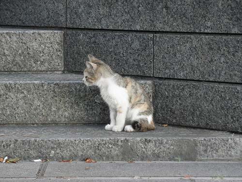 20100708猫①