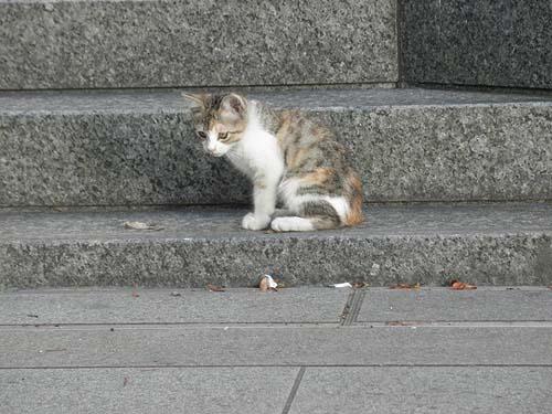 20100708猫②