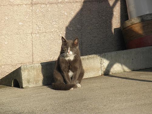 20101008猫