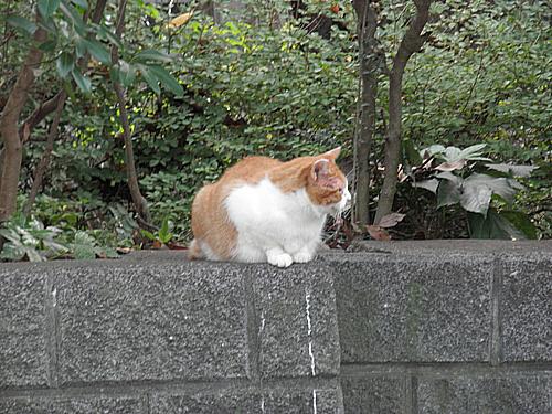 20101023猫