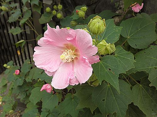 20101014花