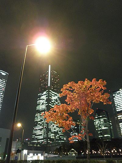 20101125紅葉と街灯