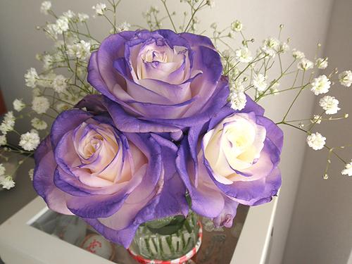 20101211部屋花